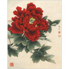 Japanese Flower Tattoo, Japanese Flowers, Japanese Art, Asian Flowers, Oriental Flowers, Japon Illustration, Botanical Illustration, Peony Painting, Watercolor Flowers