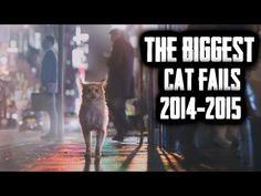 The biggest cat fails 2014 - 2015 I Love Cats, Big Cats, Cat Fails, Top 5, Life Magazine, Positive Life, Law Of Attraction, Documentaries, Funny Animals