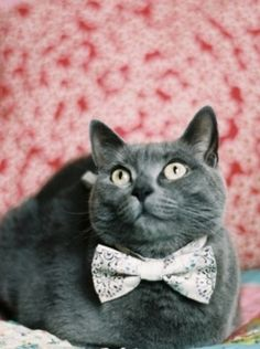 Every girl's crazy 'bout a sharp-dressed cat.