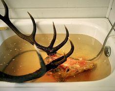 Deer skull in bath