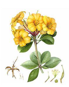 Lovely botanical print