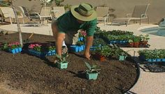 VIDEO: Learn about planting annual flower beds along with tips about adding vegetables and herbs for interest.