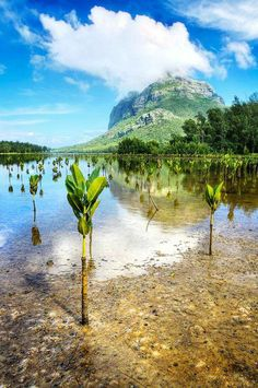 Mangroves in Mauritius  // Premium Canvas Prints & Posters // www.palaceprints.com // STORE NOW ONLINE!