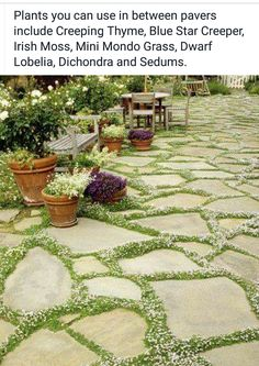 Ground cover plants in between pavers #garden #outdoor #home #stone #house #ideas #creative