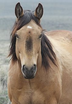 Beautiful wild horse - Idaho