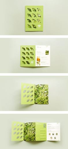 I LOVE this brochure. The cover is what really caught my eye. I love how the cover has cut out leaves with the the photo of leaves showing through. The fold is very beautiful as well.