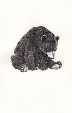 Bear - a jamie mills illustration Animal Drawings, Art Drawings, Drawings Of Bears, Pencil Drawings, Bear Drawing, Motifs Animal, Miss Moss, Bear Illustration, Bear Art