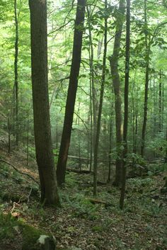Pipestem State Park West Virginia...I absolutely love Pipestem...Very Beautiful place...