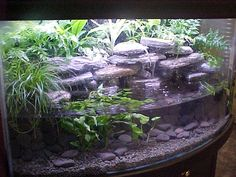 Gorgeous terrarium/water set up for amphibians