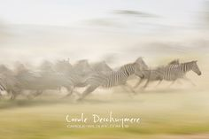 Carole Deschuymere is a passionate wildlife photographer. Join her on a photographic safari to her beloved Africa and learn how to shoot the best wildlife pictures. Shutter Speed, Slow Shutter, Action Photography, Zebras, Wilderness, Safari, Wildlife, Nature, Animals