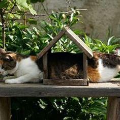 CCSE (@ccsempowerment) • Fotografii şi clipuri video Instagram Wildlife Photography, Dog Photography, Pets, Pet Cats, Cats Of Instagram, Puppies, Clipuri Video, Animals, Kitty