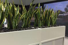 Troughs - Eco Green Office Plants Inside Garden, Roof Terraces, Green Office, Eco Green, Office Plants, Balcony Garden, Garden Ideas, Planters, Projects