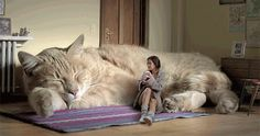 Giant Cat Couch.  Savvy needs this.
