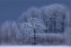 Winter by nature photographer Allan Wallberg.  Snow-covered trees.