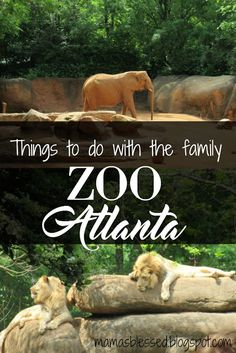 things to do with the family - visit the zoo Zoo Atlanta #onlyzooatl