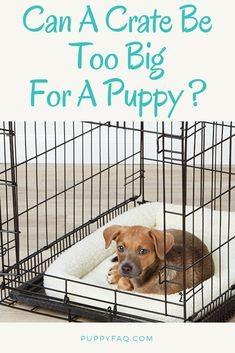 Crate training a puppy can feel a bit overwhelming for new dog moms and dads. So many things to think about! You might even be wondering if a crate can be too big for a puppy. Read all about it in this crate training article! Crate Training, Training Tips, Cheap Dog Kennels, Puppy Crate, Small Puppies, Funny Puppies, Funny Dogs, Training Your Puppy