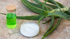 Aloe Vera – The Effective Remedy For Chronic Gastritis. Home Recipes. Home Remedies For Hemorrhoids, Aloe Vera, Julien Kaibeck, Healthy Tongue, Kidney Failure Treatment, Abdominal Bloating, Egypt, Nigella, Cleopatra