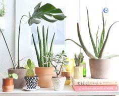 Tropische Zimmerpflanzen: Tipps & Tricks - [LIVING AT HOME]