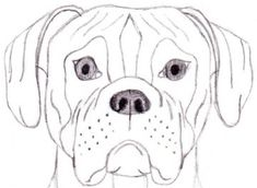 how to draw a baby pitbull