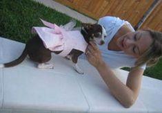 Eu Amo Artesanato: Vestido para Cachorro com Molde e Passo a Passo