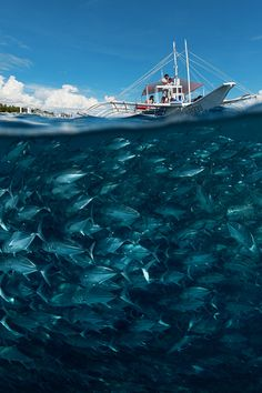 A school of fish under a boat
