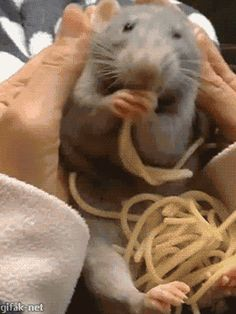 "Funny animal gifs - part 172 (10 gifs) | ""Pets later....spaghetti now."""