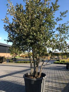 City, Garden Ideas, Plants, Trees, Gardens, Cities, Landscaping Ideas, Plant, Backyard Ideas