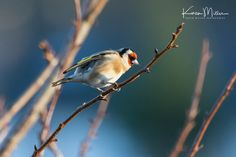 Karen Miller Photography posted a photo: