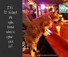 Do you know where your cat goes?  www.thecatdoctoronline.com