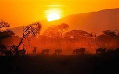 Wildebeest graze at sunrise near the Ngorongoro Crater Photo: Alamy. #Africa #Tanzania