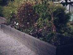 Hur man bygger en planteringslåda Plank, Outdoor Gardens, Green, Outdoors, Gardening, House, Alternative, Home, Lawn And Garden