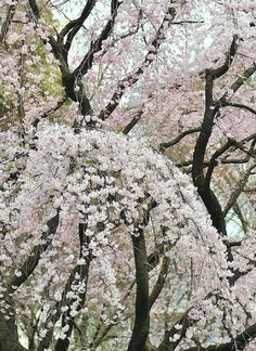 """When Spring Starts to Breath,"" Tokyo, Japan.  Photo: ajpscs"