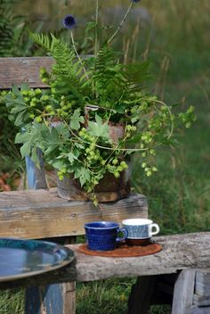Coffee in a farm