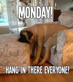 Searching of monday memes collections? Here we have funny Monday memes to descried feelings that week is ends very fast but on Monday, that day is very long and hectic. Funny Monday Memes, Happy Monday Quotes, Monday Humor Quotes, Funny Dog Memes, Funny Dogs, Funny Quotes, Monday Sayings, Quotes Friday, Friday Memes