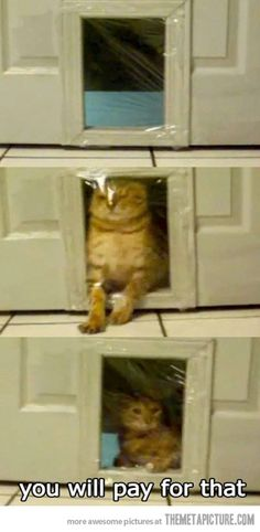 hahaha i wish i could do this to a future pet,...would be sooo hilarious