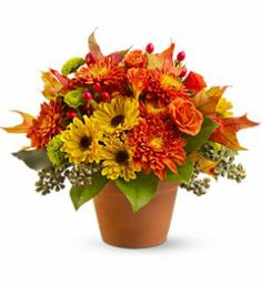 Sugar Maples in South Bend IN, Country Florist & Gifts, Inc. #autumn #floral