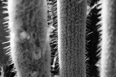 Cacto em branco e preto. . . . #jardimbotanico  #riodejaneiro  #cactus  #bnw  #bw_lover  #bnw_worldwide