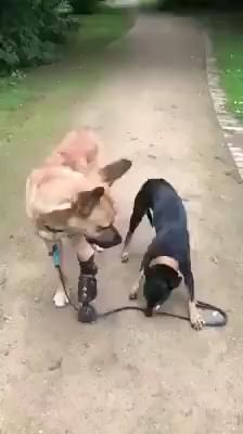 Cute Funny Dogs, Cute Funny Animals, Cute Animal Videos, Cute Animal Pictures, Cute Dogs And Puppies, Doggies, Funny Dog Videos, Cute Little Animals, Animals Beautiful