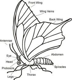 Printable Worksheet: Parts of a spider activity for young