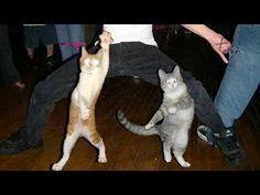 Gatos y perros bailando... ¡muy divertido!