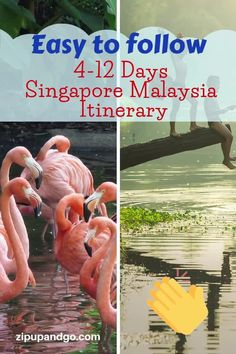Planning to visit both Singapore and Malaysia in one go? We prepared a comprehensive Singapore Malaysia Itinerary packed with great places for you. Read more on our easy to follow Singapore Malaysia Itinerary! #singaporetravel #malaysiatravel #destinations #singaporemalaysiaitinerary #travelitinerary #asiatravel #travelguide #exploreasia #easytofollowguide Visit Singapore, Singapore Malaysia, Singapore Travel, Malaysia Itinerary, Malaysia Travel Guide, Singapore Attractions, Cameron Highlands, Travel Information, Plan Your Trip