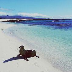Galápagos, Ecuador | InstaTrip: Island Hopping from Maui to Bali | Galápagos, Ecuador | FATHOM