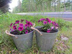 Men vi inhandlade i alla fall två fina zinkhinkar till halva priset på ÖoB, och några blommor att sätta i dem. De står nu välkomnande där nere vid infarten.