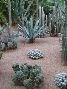 We love the desert scenery at the Majorelle Gardens!