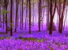 At a mystical bluebell forest in England.