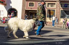 Soldier With His Dog In The Veterans Day Parade Nashville TN print will make great wall decor for your home, apartment or office. You can have the print framed or unframed and can showcase it on canvas wraps to glass prints. #photography #Nashville #Veterans #VeteransDayParade