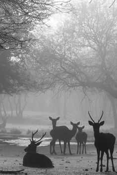 deer in the mist: The World in Pictures from the LifestyleFiles
