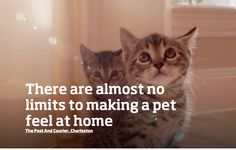 Don't let them feel all ALONE, there are almost no limits to making a pet feel at HOME.