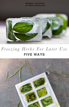 Freezing Herbs For Later Use – 5 Ways Freezing herbs allows you to store your fresh herbs longer, making your harvest more interesting and versatile! Freeze herbs in oil, in water, or as paste. Cooking Tips, Cooking Recipes, Healthy Recipes, Healing Herbs, Drying Herbs, Herbal Remedies, Health Remedies, Food Hacks, Herbalism