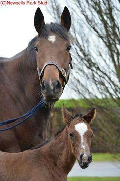 Danedream and her Frankel filly